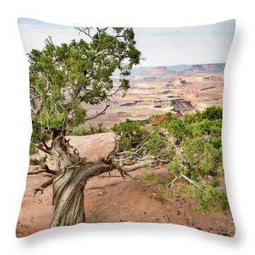 Juniper Over The Canyon Throw Pillow
