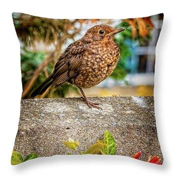 Juvenile Blackbird Throw Pillow