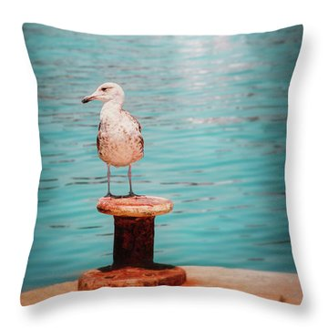 Juvenile European Herring Gull  Throw Pillow