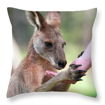 Throw Pillow featuring the photograph Kangaroo by Rob D Imagery