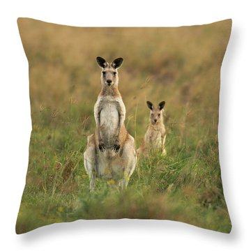 Kangaroos In The Countryside Throw Pillow