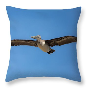 Throw Pillow featuring the photograph Kill Devil Pelican by Lora J Wilson