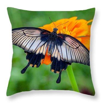 Kite Swallowtail  Throw Pillow