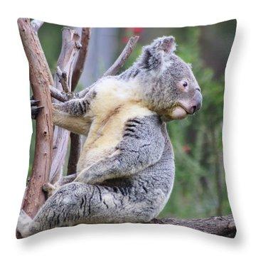 Koala In Tree Throw Pillow