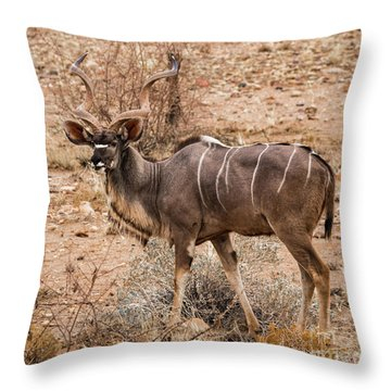 Kudu In The Kalahari Desert, Namibia Throw Pillow