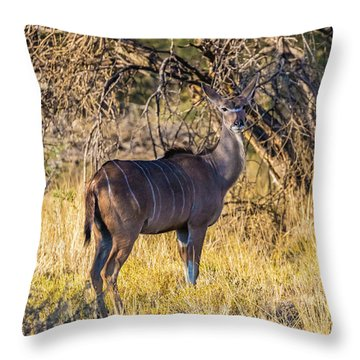 Kudu, Namibia Throw Pillow
