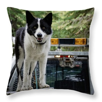 Throw Pillow featuring the photograph Kuma by Brad Allen Fine Art