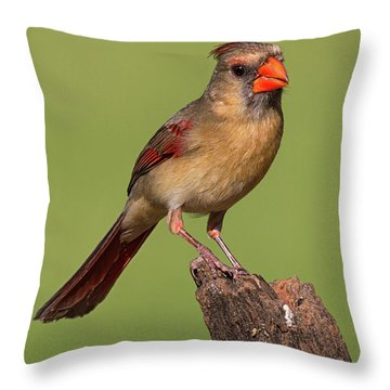 Lady Cardinal Throw Pillow