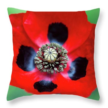 Throw Pillow featuring the photograph Ladybird Poppy Flower by Tim Gainey