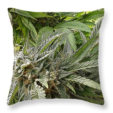 Throw Pillow featuring the photograph Larry Og #2 by Ahma's Garden