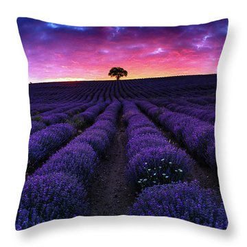 Lavender Dreams Throw Pillow