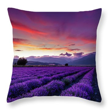 Lavender Season Throw Pillow