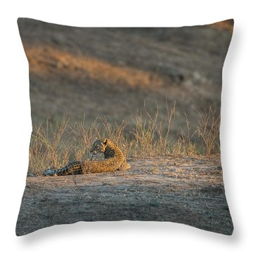 Throw Pillow featuring the photograph Lc10 by Joshua Able's Wildlife