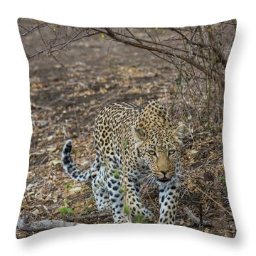 Throw Pillow featuring the photograph LC2 by Joshua Able's Wildlife