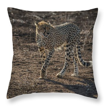 Throw Pillow featuring the photograph LC3 by Joshua Able's Wildlife