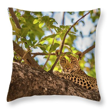 Throw Pillow featuring the photograph LC9 by Joshua Able's Wildlife