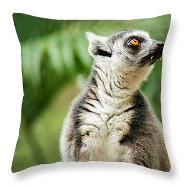 Throw Pillow featuring the photograph Lemur By Itself Amongst Nature. by Rob D Imagery