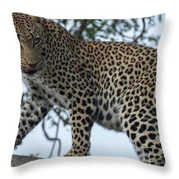 Leopard Anticipation Throw Pillow