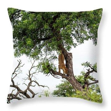 Leopard Descending A Tree Throw Pillow