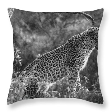 Leopard Sitting Black And White Throw Pillow