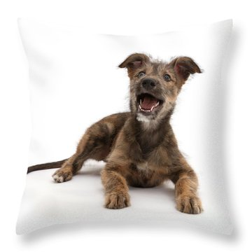 Throw Pillow featuring the photograph Life's A Bark by Warren Photographic