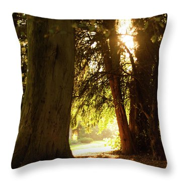 Throw Pillow featuring the photograph Light Between Trees by Scott Lyons
