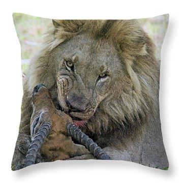 Lion Prey Throw Pillow