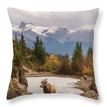 Little Bighorn Throw Pillow