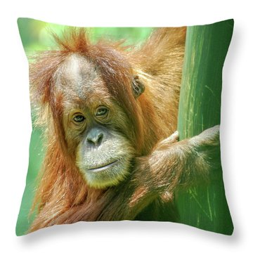 Throw Pillow featuring the photograph Little Red by Howard Bagley