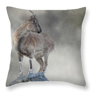 Little Rock Climber Throw Pillow