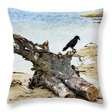 Lone Carmel Crow Atop Driftwood Throw Pillow