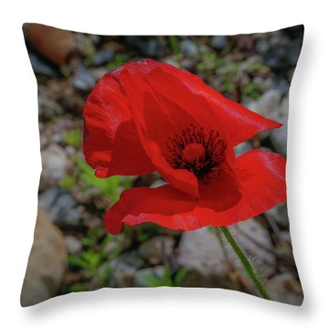 Lone Red Flower Throw Pillow