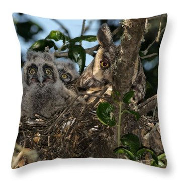 Long-eared Owl And Owlets Throw Pillow