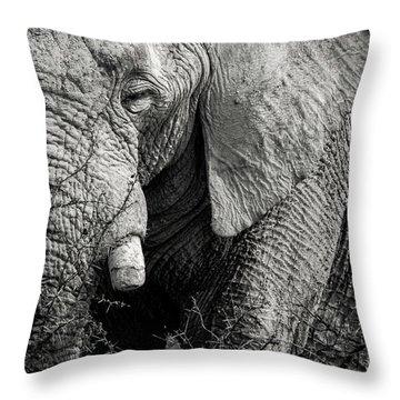 Look Of An Elephant Throw Pillow