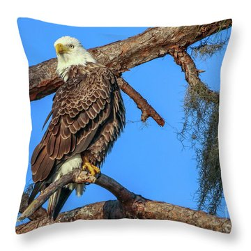 Throw Pillow featuring the photograph Lookout Eagle by Tom Claud
