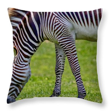 Love Zebras Throw Pillow