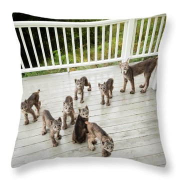 Throw Pillow featuring the photograph Lynx Family Portrait by Tim Newton