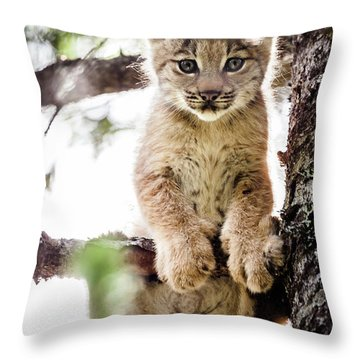 Throw Pillow featuring the photograph Lynx Kitten In Tree by Tim Newton