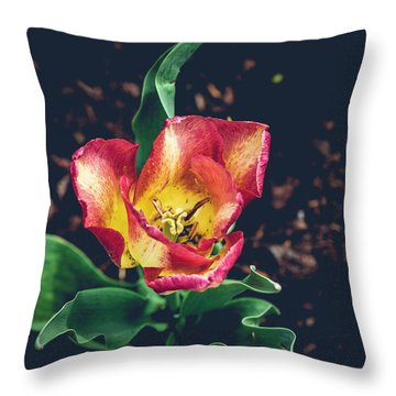 Magnificence Squared Throw Pillow