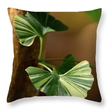 Throw Pillow featuring the photograph Maidenhair Tree by Dale Kincaid