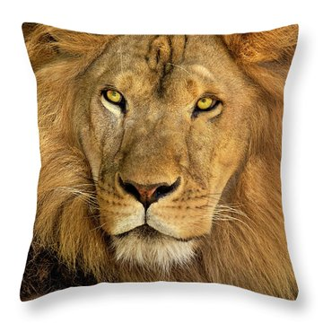 Male African Lion Portrait Wildlife Rescue Throw Pillow