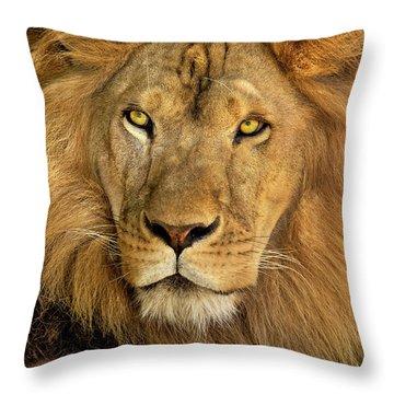 Male African Lion Portrait Wildlife Rescue Throw Pillow