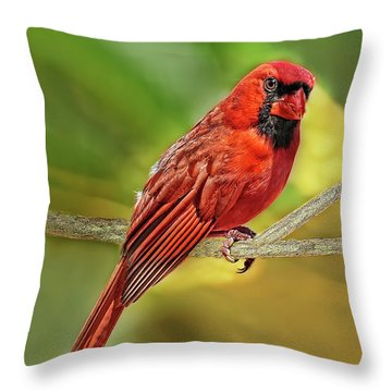 Male Cardinal Headshot  Throw Pillow