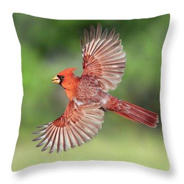 Male Cardinal In Flight Throw Pillow
