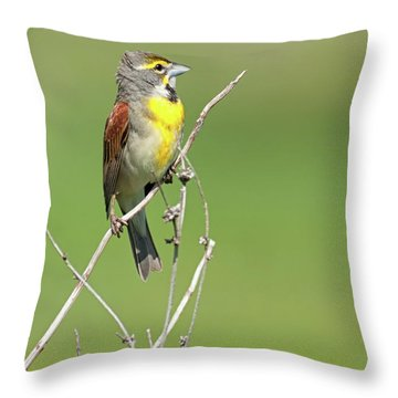 Male Dickcissel Throw Pillow