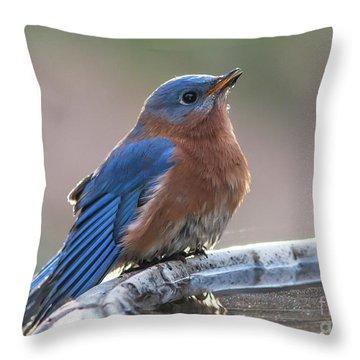 Male Eastern Blue Bird Throw Pillow