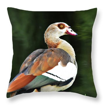 Male Egyptian Goose Throw Pillow