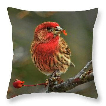 Male House Finch With Crabapple Throw Pillow