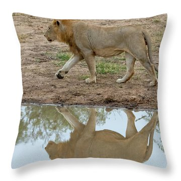 Male Lion And His Reflection Throw Pillow
