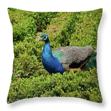 Male Peafowl In Retiro Park, Madrid, Spain Throw Pillow